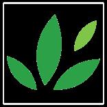 Tree-of-life-logo3